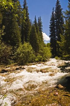 Rushing Mountain Stream Royalty Free Stock Photography