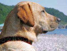 Free Dog Head Stock Image - 912391
