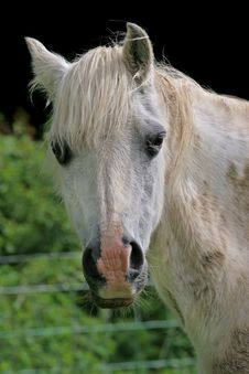 Free Friendly Pony Stock Images - 913394