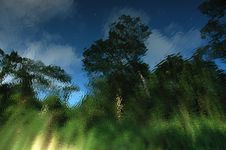 Free Tree Reflection Stock Images - 914084