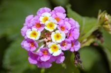 Free Hidden Bouquet Stock Image - 914291