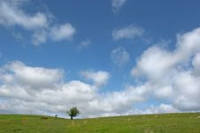 Free Solitary Hawthorn Royalty Free Stock Image - 914566