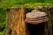 Free Red Line Mushroom Stock Photos - 915883