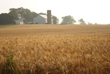 Free Farm Royalty Free Stock Images - 916009