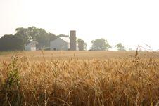 Free Farm Stock Photography - 916032