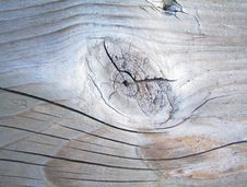 Free Tree Plank Stock Photos - 916053