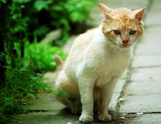 Free Cat In The Garden Stock Image - 917541