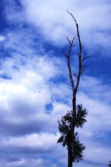 Free Clouds Behind A  Tree Stock Photography - 917642