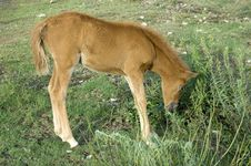 Free Foal Stock Photos - 917823