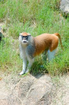Monkey  3 Stock Photo