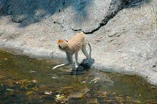 Monkey  5 Stock Photo