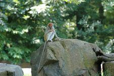 Free Monkey  6 Stock Image - 919621