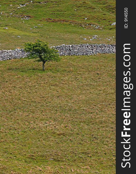 Hawthorn Tree In A Barren Landscape