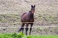 Free Horse Stock Image - 91031511