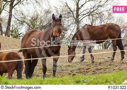Free Horses Stock Photography - 91031522