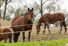 Free Horses Stock Photography - 91031522