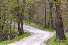 Free Forest Road Royalty Free Stock Images - 91031539