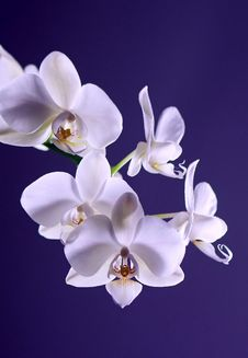 Free White Moth Orchid In Close Up Photography During Daytime Royalty Free Stock Photography - 91107687