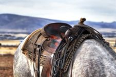 Free Brown And Black Leather Horse Saddle On White And Gray Animal Royalty Free Stock Image - 91107796