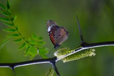 Free Shallow Photography Of Brown And Black Butterfly Perched On Black Plantbranch Stock Images - 91248454