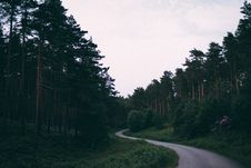 Free Forest During Daylight Royalty Free Stock Photos - 91250128