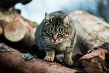 Free Tabby Cat On Pile Of Logs Royalty Free Stock Photography - 91251647