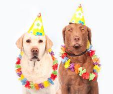 Free Dog, Party Hat, Dog Like Mammal, Dog Breed Stock Photo - 91370810