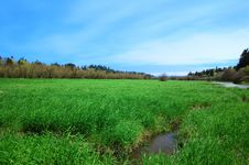 Free Salmon Creek Marshland View Royalty Free Stock Photography - 9157827