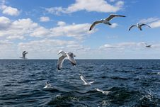 Free Seagulls Flying Over The Ocean During Daytime Stock Photo - 91519470