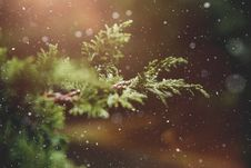 Free Snowflakes And Pine Branch Royalty Free Stock Images - 91519589