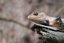 Free Shallow Focus Photography Of White And Black Lizard On White Tree Branch Royalty Free Stock Photos - 91628818