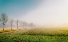 Free Field Of Crops At Sunrise Royalty Free Stock Image - 91629946