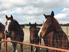 Free Horses Standing Next To A Fence Royalty Free Stock Photo - 91630395