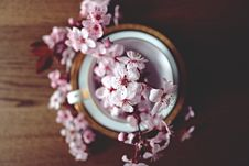 Free Bowl Filled With Apple Blossom Flowers Stock Images - 91630574