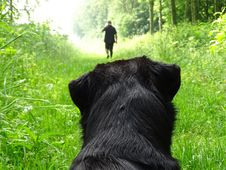Free Dog Watching Man Walking In Forest Stock Images - 91630844