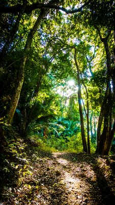 Free Forest Path Royalty Free Stock Photo - 91630965