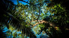 Free Palm Tree In Forest Royalty Free Stock Photos - 91630968