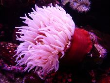 Free Pink And Red Seaweeds Royalty Free Stock Images - 91631329