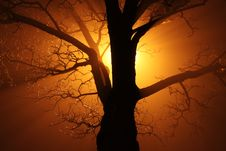 Free Silhouette Of Bare Tree Against Sunlight Royalty Free Stock Photo - 91631345