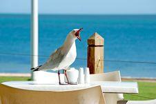 Free Bird, Sky, Beak, Sea Royalty Free Stock Image - 91631366