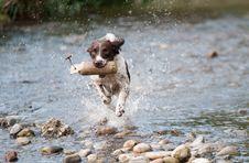 Free Dog, Water, Dog Like Mammal, Dog Breed Stock Images - 91631394
