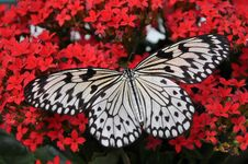 Free Butterfly, Moths And Butterflies, Invertebrate, Insect Stock Photos - 91631493