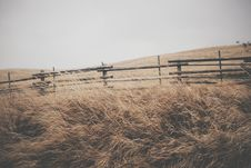 Free Beige Grass Near Brown Wood Fence Royalty Free Stock Photos - 91664058