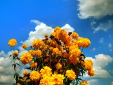 Free Yellow Flowers Against The Cloudy Sky Background Stock Photos - 91691443