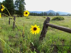 Free Summer Wildflowers Near Old Caves Crater Stock Photos - 91754703