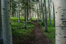 Free Inner Basin Trail Stock Photos - 91754743