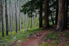 Free Inner Basin Trail Stock Images - 91754784