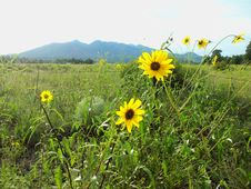 Free Summer Wildflowers Near Old Caves Crater Stock Image - 91754831