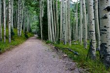 Free Inner Basin Trail Stock Photo - 91754970