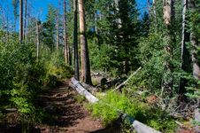 Free Inner Basin Trail Stock Photography - 91754972